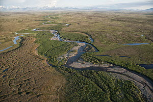 Coastal plain, which is the calving and nursing grounds of Porcupine caribou herd and is threatened by potential oil and gas development, Arctic National Wildlife Refuge, Alaska - Peter Mather