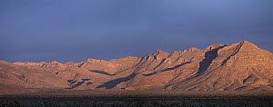 Beaver Dam Mountains from Beaver Dam Wash National Conservation Area, Utah - Scott Leslie