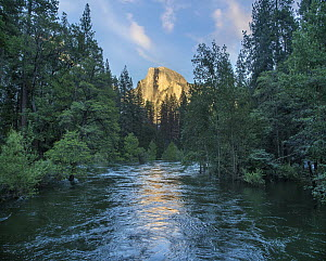 Half Dome reflecting in Merced River, Yosemite National Park, California - Tim Fitzharris