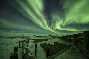 Northern lights over Alyeska Pipeline, which carries oil from oil fields in Prudhoe Bay near the Arctic National Wildlife Refuge, down to Valdez, Alaska  -  Peter Mather