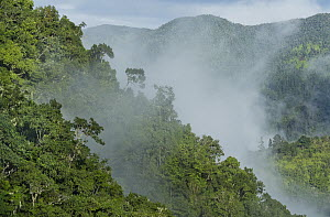 Mist over montane rainforest canopy, Blue and John Crow Mountains National Park, Jamaica  -  Kevin Schafer