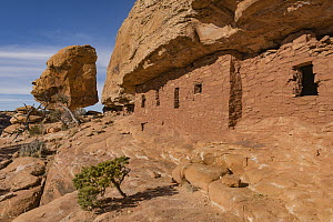 The Citadel Ruins, Cedar Mesa area, Bears Ears National Monument, Utah  -  Jeff Foott