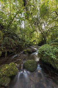 Stream in Harenna Forest, Bale Mountains National Park, Ethiopia - Vincent Grafhorst