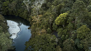 River and forest, Don Diego River, Taironaka Lodge, Colombia  -  Paul Bertner