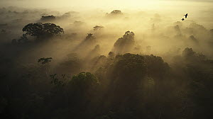 Rainforest at sunrise, Sani Lodge, Ecuador - Paul Bertner