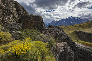 Wildflowers and mountain range, Cordillera Paine, Torres del Paine National Park, Chile - Benjamin Olson