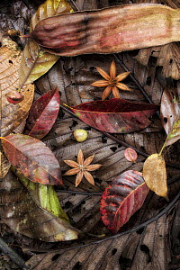 Fallen seeds and leaves in rainforest, Costa Rica - Greg Basco/ BIA