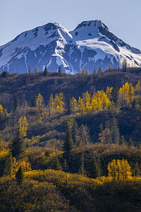 Taiga and snow-covered mountains in autumn, Glacier Bay National Park, Alaska  -  Andrew Peacock