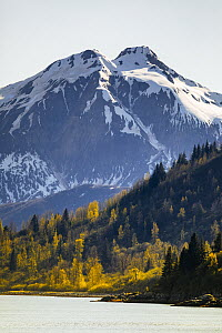 Taiga and coastal snow-covered mountains in autumn, Glacier Bay National Park, Alaska  -  Andrew Peacock