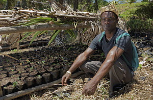 Humbertiodendron Tree (Humbertiodendron saboureaui) saplings are grow in makeshift greenhouse, shown by Tovolah Michael Cyrille, village chief, Andranokoditra, Madagascar  -  Daniel J. Cox