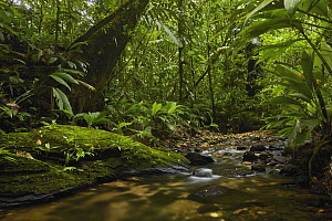 Stream in rainforest, Nuqui, Colombia - Paul Bertner