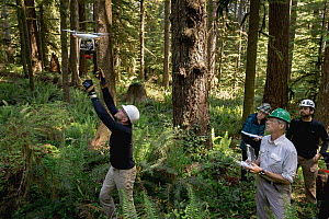 Marbled Murrelet (Brachyramphus marmoratus) biologists using drone to locate nests, Newport, Oregon  -  Jaymi Heimbuch