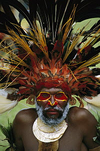 Aboriginal man wearing tribal headdress made with feathers from Bird-of-Paradise, Parrots and Lorikeets, Papua New Guinea  -  Patricio Robles Gil