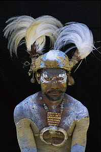 Aboriginal man wearing tribal headdress with feathers from King of Saxony Bird of Paradise (Pteridophora alberti), Papua New Guinea - Patricio Robles Gil