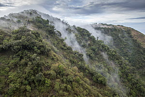 Forested hills in mist, Ngong Hills, Kenya  -  Paul Souders/ Worldfoto