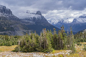 Conifers and mountains, Glacier National Park, Montana - Jeff Foott