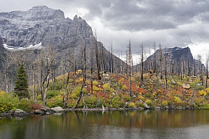 Burned trees and mountains, Lost Lake, Glacier National Park, Montana - Jeff Foott