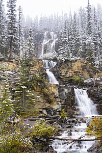 Waterfall after autumn snowfall, Tangle Creek Falls, Jasper National Park, Alberta, Canada  -  Jeff Foott