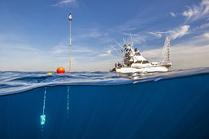 Deep-set buoy gear floating at surface with strike indicators allowing biologists to know when swordfish is caught, San Diego, California  -  Ralph Pace