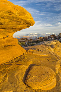 Sandstone rock formations, La Sal Mountains, Arches National Park, Utah  -  Jeff Foott
