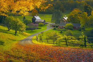 Deciduous forest and barn in autumn, Woodstock, Vermont  -  Chase Dekker