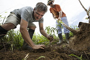 Trees being planted in pasture for tropical rainforest regeneration, Golfito, Costa Rica  -  Cyril Ruoso