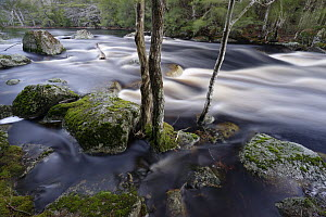 Red Maple (Acer rubrum) trees and river, Mersey River, Medway Lakes Wilderness Area, Nova Scotia, Canada  -  Scott Leslie