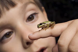 A three year old boy with a Pacific Tree Frog (Pseudacris regilla) - Michael Durham