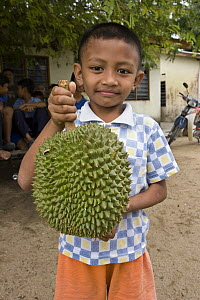 Durian (Durio zibethinus) fruit held by a young Orang Asli boy in Johore, Malaysia  -  Michael Durham