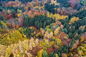 Forest in autumn, Teutoburg Forest, Lower Saxony, Germany  -  Willi Rolfes/ BIA