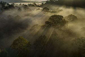 Mist over virgin rainforest at sunrise, Danum Valley Conservation Area, Sabah, Borneo, Malaysia  -  Ch'ien Lee