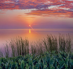 Sunrise over Indian River Marsh, near Titusville, Florida  -  Tim Fitzharris