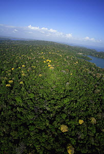 Aerial view of the Canal Zone, Barro Colorado Island, Research Station of the Smithsonian Tropical Research Institute, Panama  -  Christian Ziegler