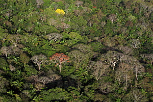 Aerial view of the Canal Zone, tropical forest canopy in Soberania National Park, Panama  -  Christian Ziegler