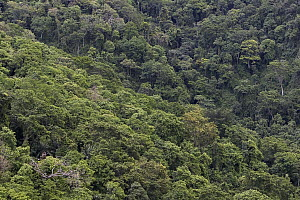 Aerial view of tropical forest, Gombe Stream National Park, Kakombe Valley, Tanzania - Ingo Arndt