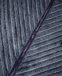 SEM close-up detail of a feather at 28x magnification showing the main shaft or rachis, barbs and interlocking barbules which provide structural strength - Albert Lleal