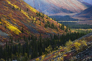 Autumn in the Ogilvie Mountains and boreal forest near the Dempster Highway, Yukon, Canada - Theo Allofs