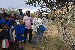 Cheetah (Acinonyx jubatus) named Chewbaaka met by students at the Cheetah Conservation Fund with Laurie Marker, Kenya - Suzi Eszterhas
