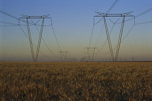 Electricity pylons and power lines from Itaipu Dam running through a wheat field, Brazil - Luciano Candisani