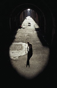 Domestic Cat (Felis catus) backlit stray cats in an alley - Mitsuaki Iwago
