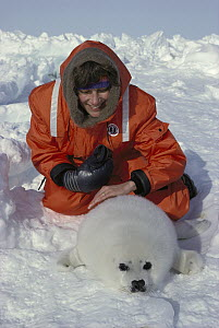Harp Seal (Phoca groenlandicus) pup and tourist, Magdalen Islands, Canada - Kevin Schafer