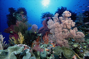 Reef scenic at one-hundred-twenty feet, showing Soft Corals, Sea Fans, Crinoids, Leather Corals, Sea Whips and Sponges, Solomon Islands  -  Chris Newbert