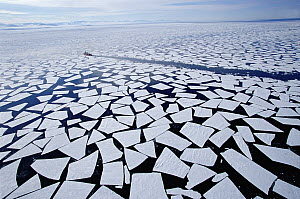Ice floes that have broken off sea ice edge in late summer, coast guard icebreaker in background, McMurdo Sound, Antarctica - Norbert Wu