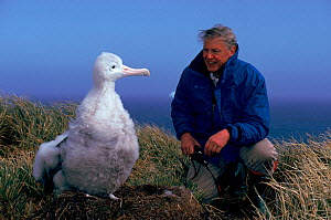 Sir David Attenborough with Wandering albatross (Diomedea exulans) chick, South Georgia. On location for 'Life in the Freezer' 1992. - Ben Osborne