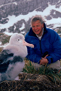 Sir David Attenborough with Wandering albatross (Diomedea exulans) chick, South Georgia, on location for 'Life in the Freezer' 1992 - Ben Osborne