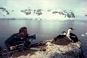 Ian McCarthy in Antarctica filming Blue-eyed cormorants for BBC television series 'Life in the Freezer'  -  Ben Osborne