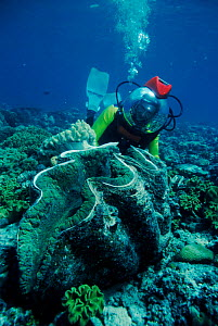 Martha Holmes with Giant Clam during filming of BBC television series 'Seatrek' 1991  -  Georgette Douwma