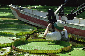 Camerman Tim Sheperd filming Giant Victoria water lily for BBC series Private Life of Plants, Brazil, 1993 - Neil Lucas