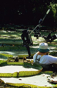 "Cameraman Tim Shepherd filming Royal Water Lilies, on location in Brazil for BBC television series ""Private Life of Plants"", December 1993 - Neil Lucas"