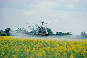 Helicopter spraying pesticide on oil seed rape. England Humberside - Keith Scholey